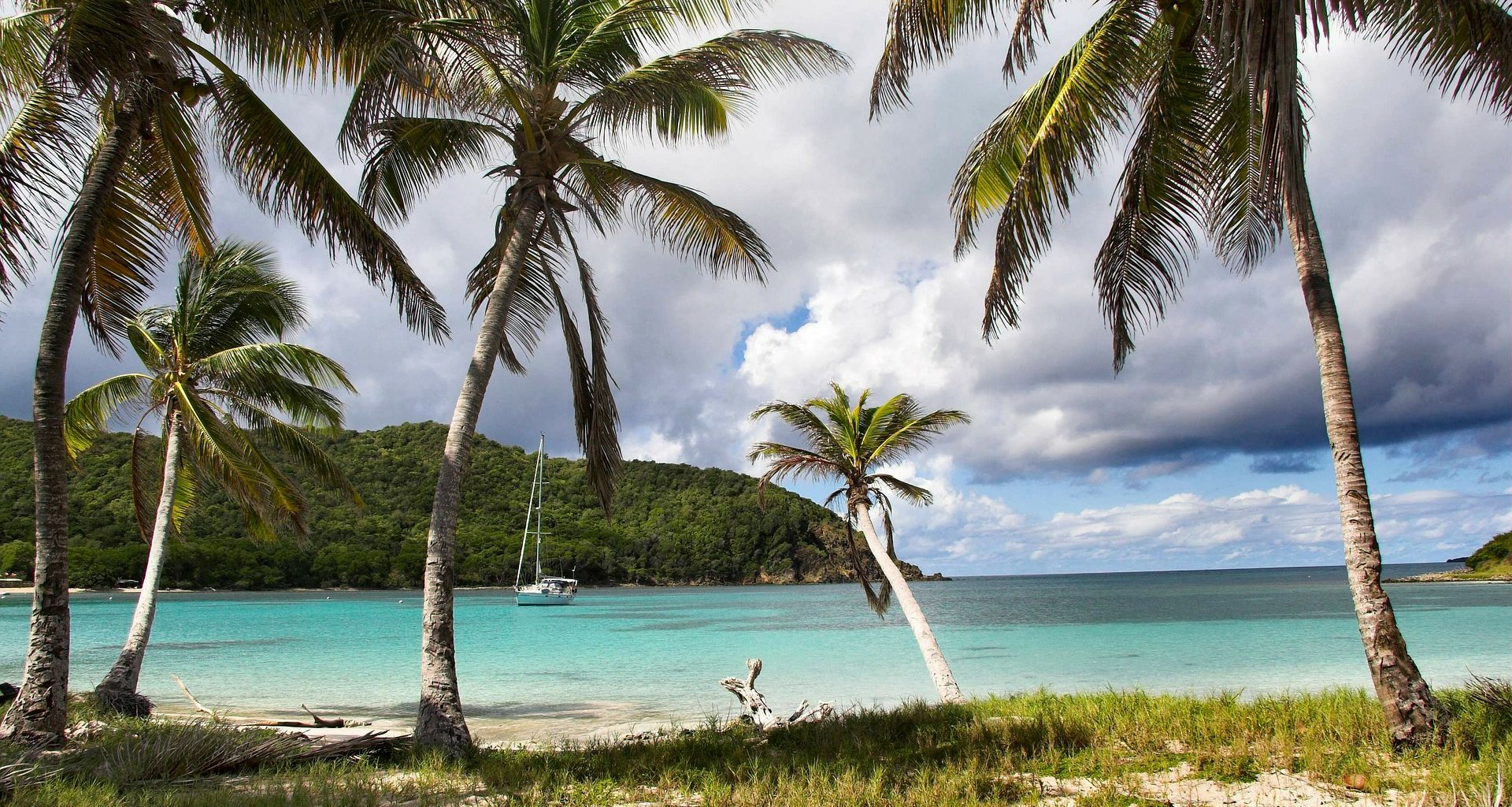 trees and beach in st. vincent honeymoon