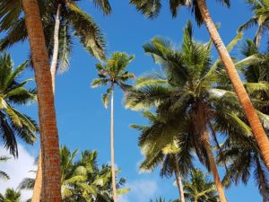 Fiji Honeymoon Packages – Top 10 Resorts & Travel Guidehoneymoon destination
