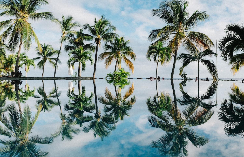 trees on a Mauritius honeymoon