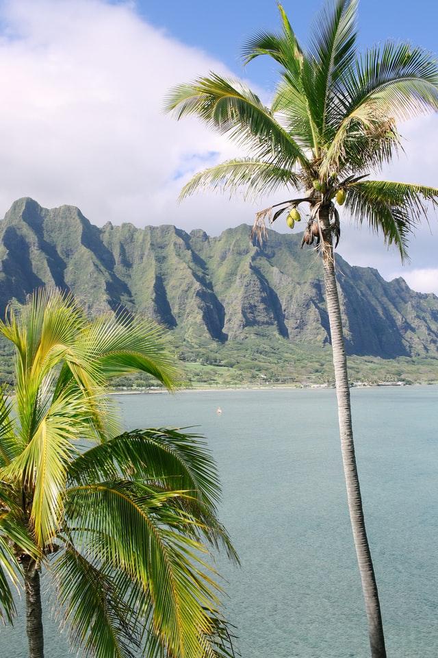 palm tree in maui during honeymoon