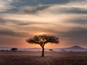South Africa Honeymoon – Everything You Need to Knowhoneymoon destination